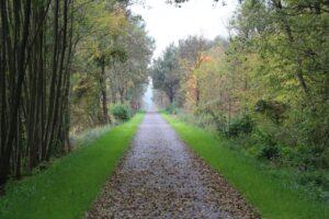 Ścieżka rowerowa biegnąca przez las zasypana pierwszymi, jesiennymi liśćmi.