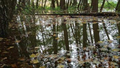 Na zdjęciu znajduje się fragment lasu oraz woda