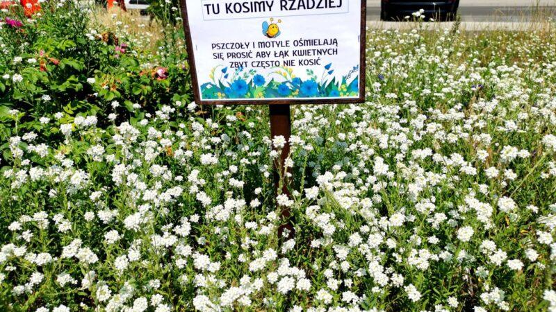 łąka kwietna, białe kwiaty, tabliczka z napisem tu kosimy rzadziej
